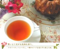 紅茶 セイロン ウバ・ハイランズ茶園
